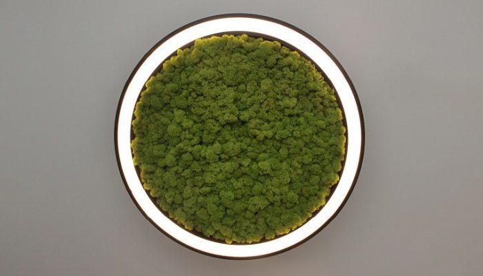hoop! 50 moss подвесной светильник